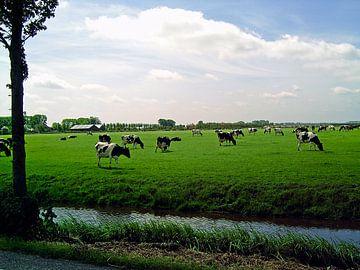 Koeien in weiland van Frank Kleijn