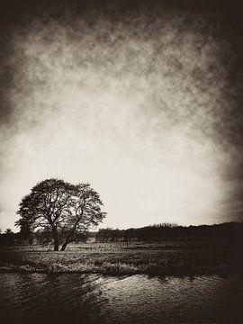 Lonely Tree von Harrie van der Meer