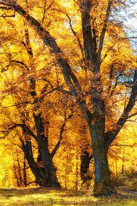 Eiken in de Herfst