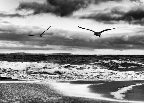 Fliegende Vögel am Ostseestrand in schwarz-weiß
