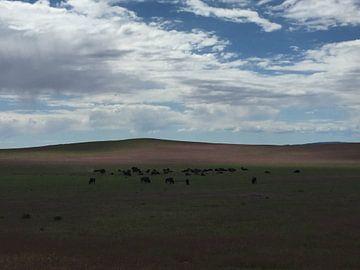 Grazende bizons in weiland van Samantha Enoob