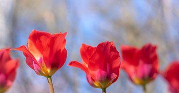 Vrolijke Tulpen van Jefra Creations
