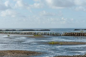Rijsdammen in de deense waddenzee van