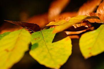 herfstbladeren van Marieke Funke