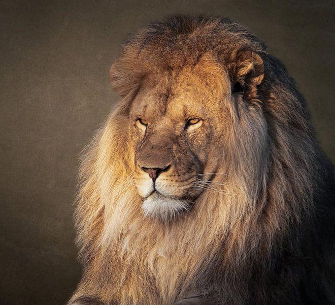 Leeuw: portret van een prachtige leeuw van Marjolein van Middelkoop