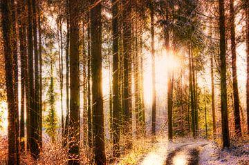 Towards the sun van Nicc Koch