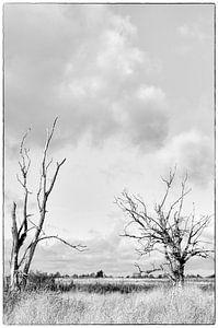 Desolate Oostvaardersplassen Flevoland van