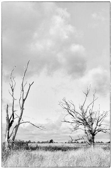 Desolate Oostvaardersplassen Flevoland