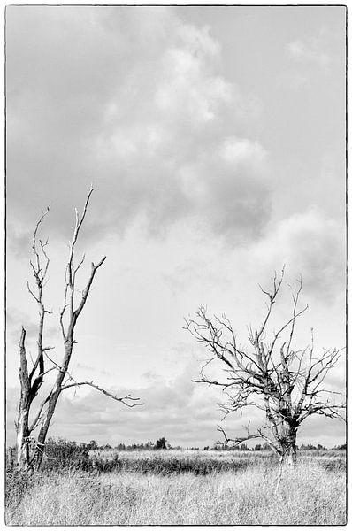 Desolate Oostvaardersplassen Flevoland van Watze D. de Haan