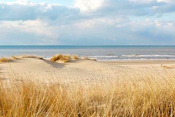 Scheveningen duinen van Micky Bish
