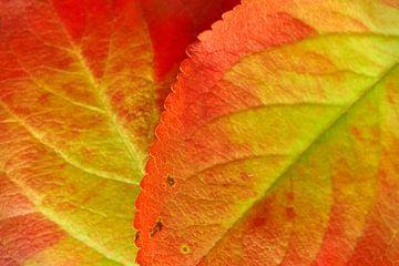 Oranje groene herfstbladeren van Harry Wedzinga