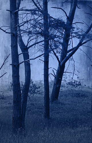 Wald im Nachtlicht