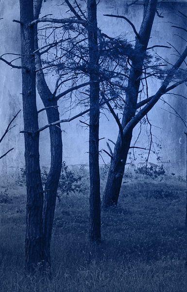 Wald im Nachtlicht van Rosi Lorz