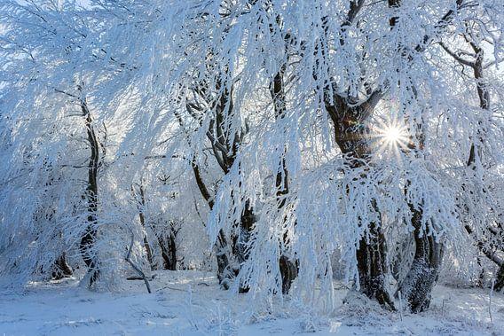 magical winter van Daniela Beyer