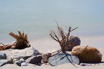 Stilleven op het strand