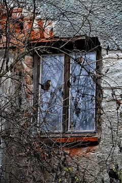 Oud huis - linker scherm venster met merels van Christine Nöhmeier