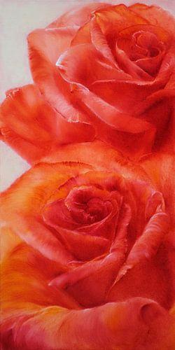 Rose van