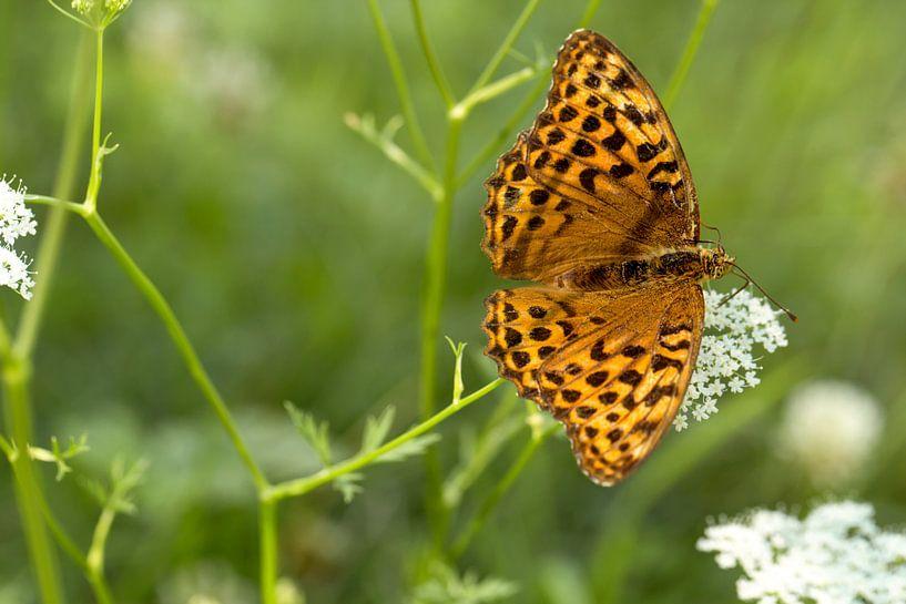 vlinder keizersmantel van Martina Weidner