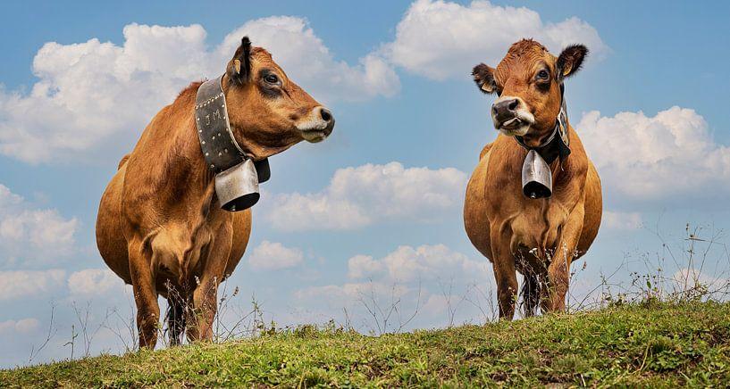 Vaches avec cloche sur Anouschka Hendriks