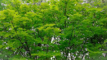 Tree green van Jenny Heß