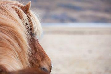 Islandpferd blickt durch das Tal von Irene Lantman