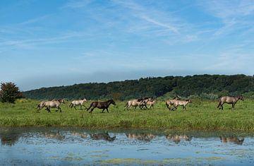 Kudde wilde paarden 01 van Cilia Brandts