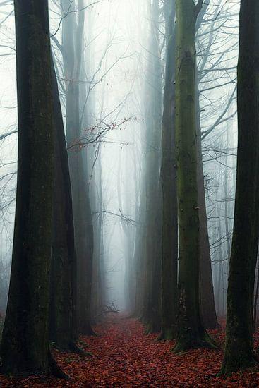 Remaining. van Inge Bovens