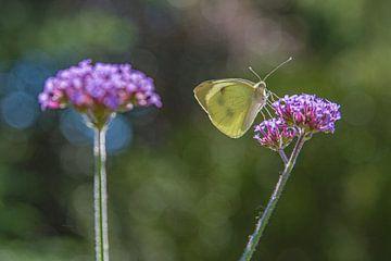 Schmetterling auf Blume von Leo Luijten