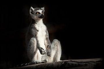 un lémurien à queue rousse sur fond noir foncé est assis comme s'il était en train de faire de la pr sur Michael Semenov