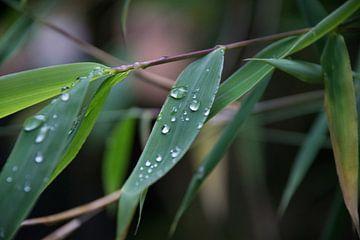 Bamboe blad van Jan van Voorst Vader