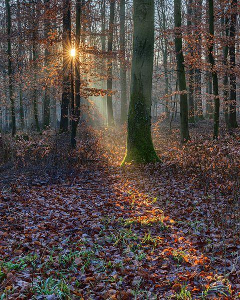 Im Lichte der Doppelsonne von Uwe Ulrich Grün