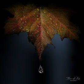Vallende regendruppel van Flower and Art
