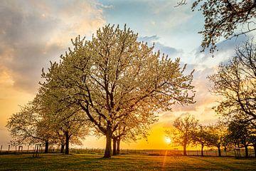 Zonsondergang in de lente tussen de bloesems van Pieterpb
