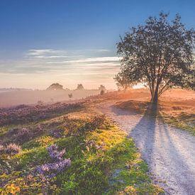 Sonnenaufgang über einer Moorlandschaft an der Veluwe von Fotografiecor .nl