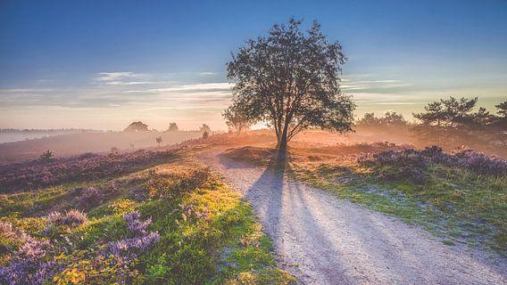 Zonsopkomst boven een heidelandschap op de Veluwe