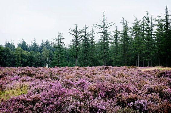Zilvensche Heide van Christiaan Krouwels