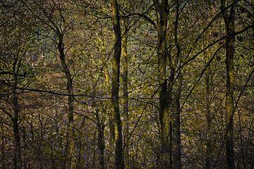 doorkijkje in donker bos von Hanneke Luit