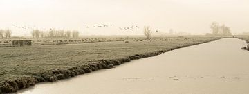 Bevroren polder landschap met bevroren sloot en vliegende ganzen in Nederland van Leoniek van der Vliet