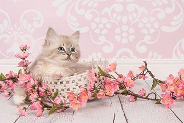 Pretty in Pink von Elles Rijsdijk