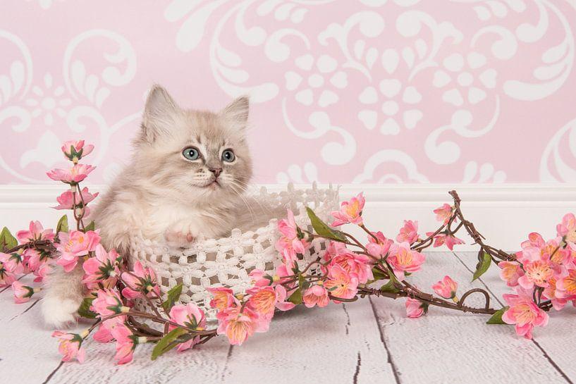 Pretty in Pink van Elles Rijsdijk