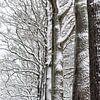 Besneeuwde bomen van Margot Klaren thumbnail