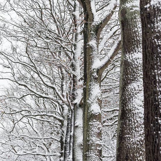 Besneeuwde bomen van Margot Klaren
