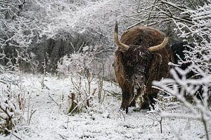 Galloway im Schnee