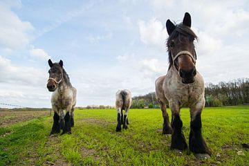 drie Paarden in de weide van Brian Morgan