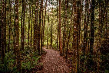 Wanderweg in Tasmanien von Eveline Dekkers