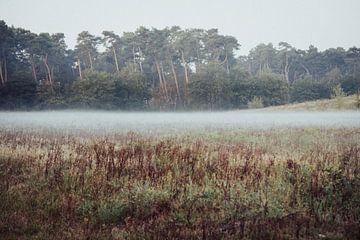 Natuur van Meike Huibers