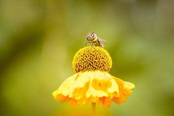 Gelbe Summer von Marjan Kooistra