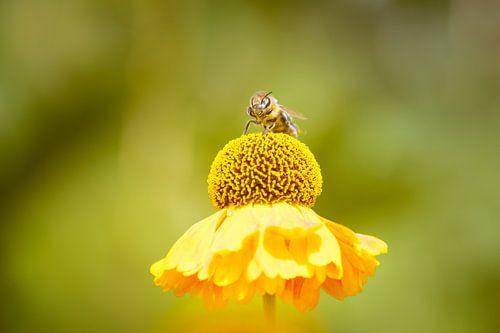 Yellow Summer van Marjan Kooistra