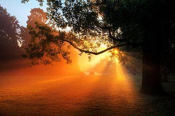 Vondelpark zonsopkomst boom von Dennis van de Water