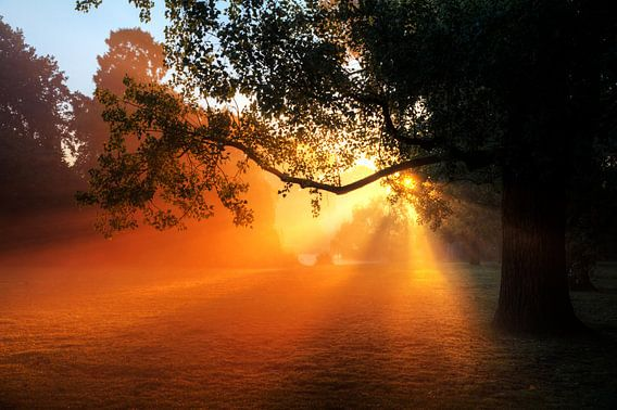 Vondelpark zonsopkomst boom